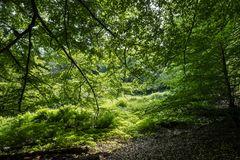 Waldlichtung im Licht