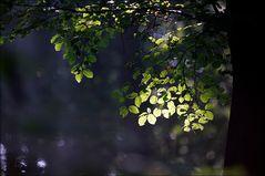 Waldmelodie