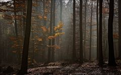 Waldmomente