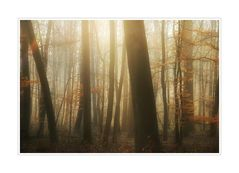 < Waldmorgen >