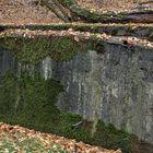 Waldmotiv im Herbst