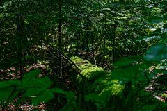 Waldmotive