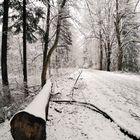 Waldmotive im Winter