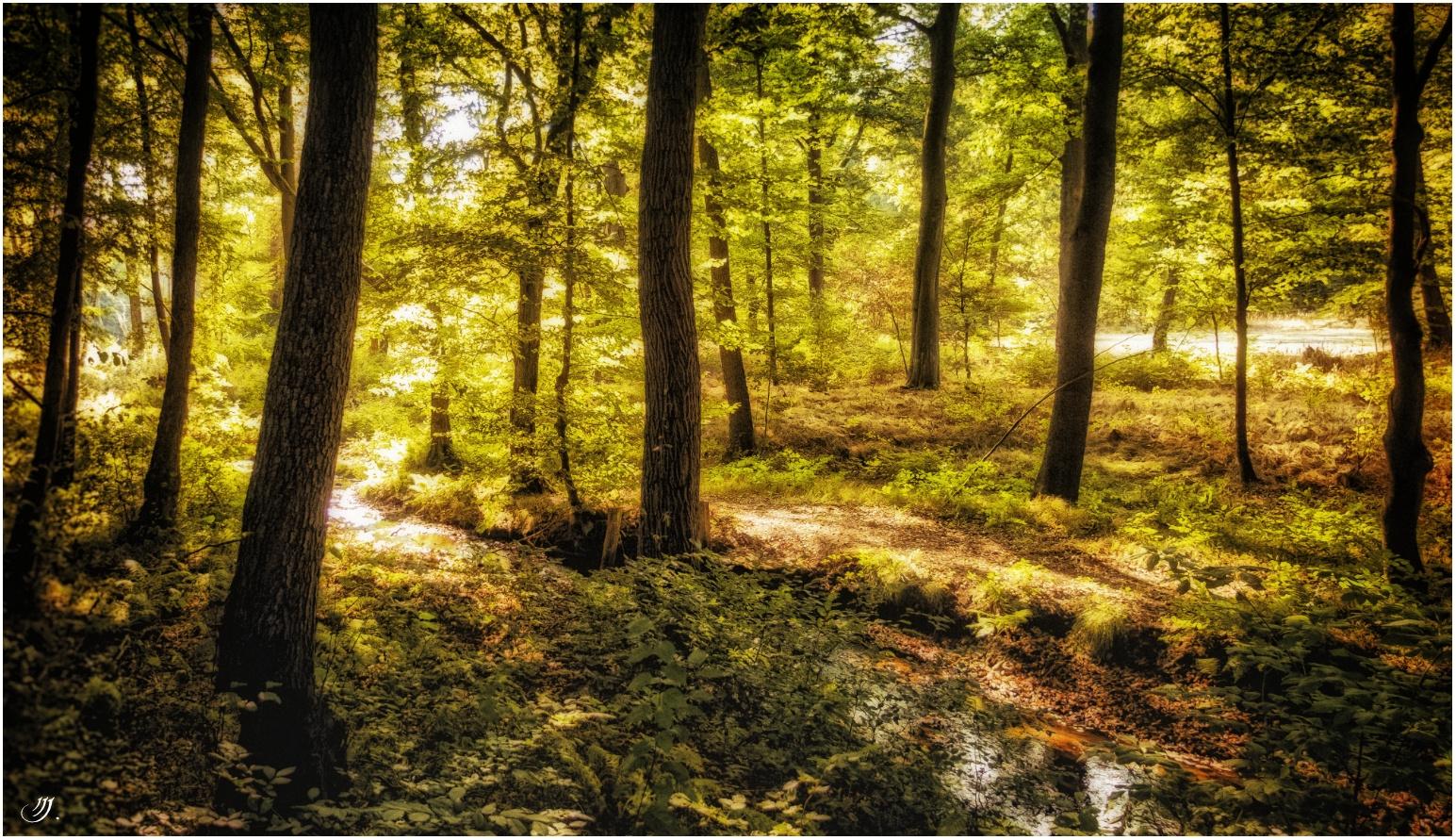 Waldmystik   