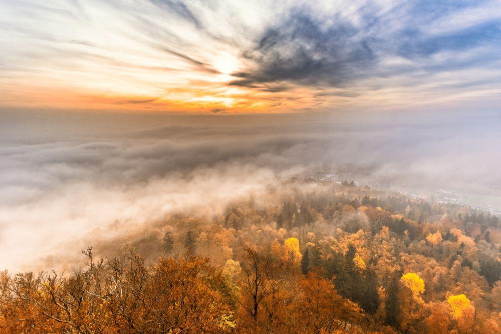 Wald:Nebelblick