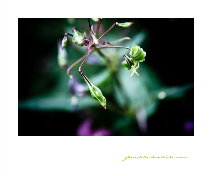 Waldpflanze