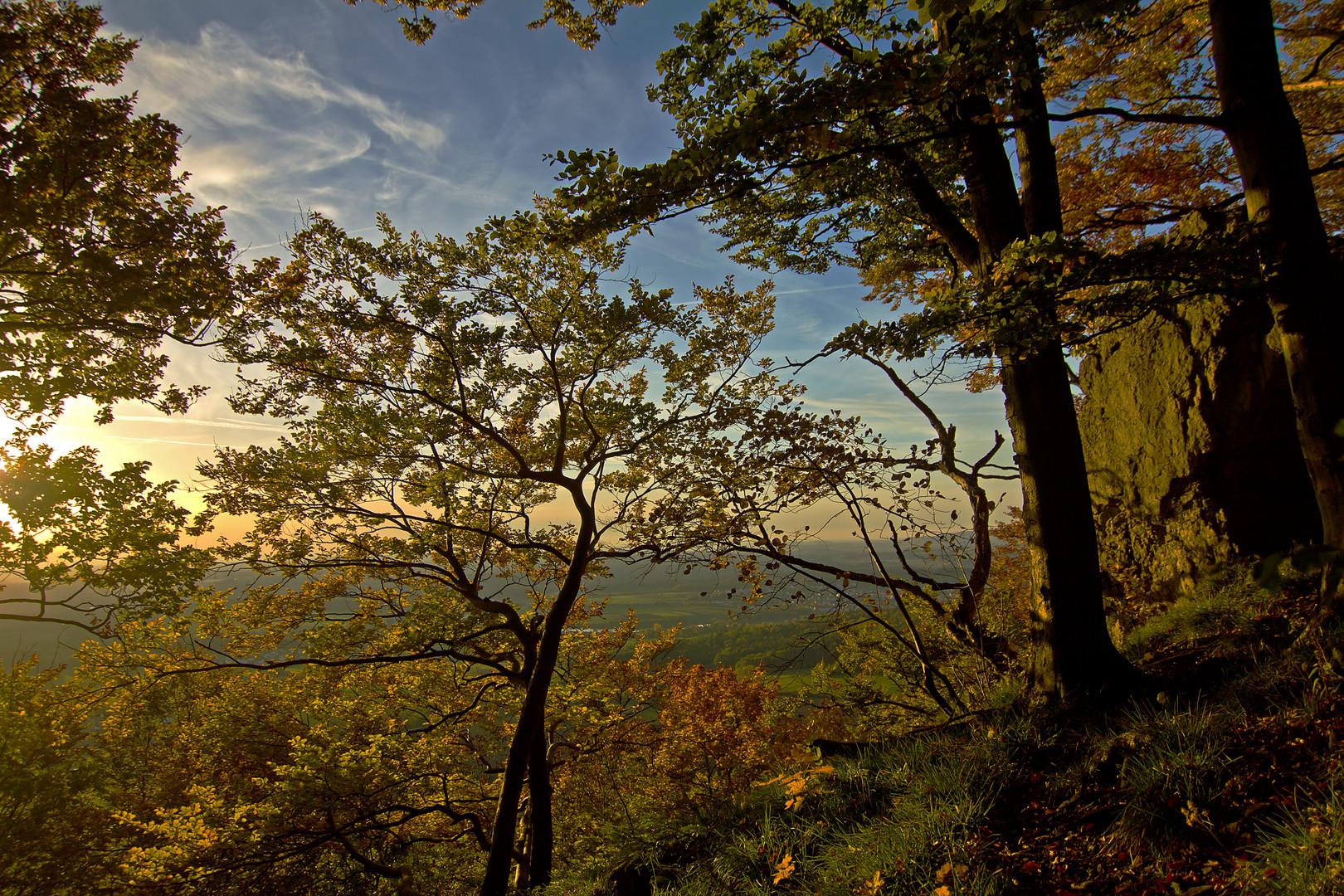 Waldrand an der Klippe im Herbst