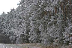 Waldrand mit Puderzucker-Schnee