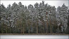 """Waldrand mit Schnee-""""Zucker"""""""