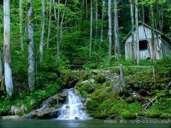 Waldromantik