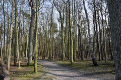 Waldromantik bei Wilhelmshöhe