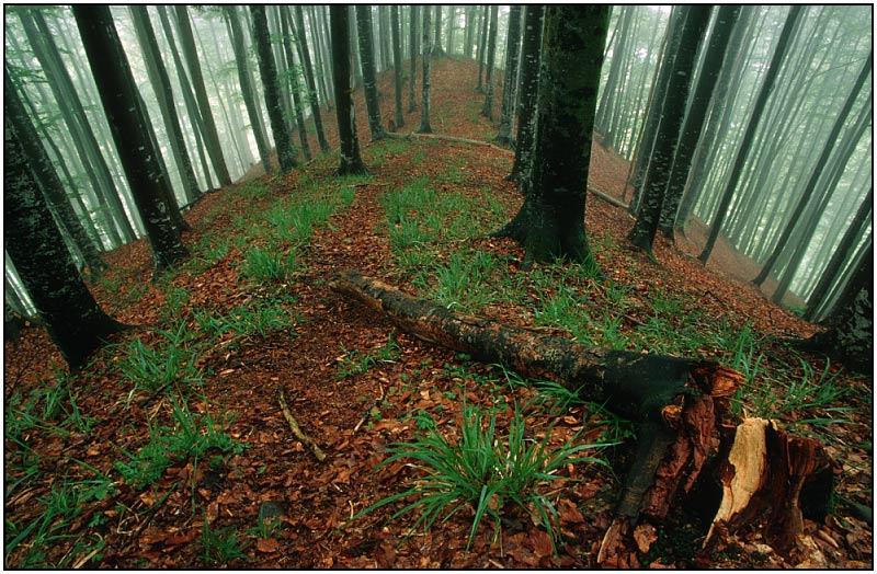 Waldrücken
