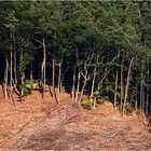 Waldschnitt