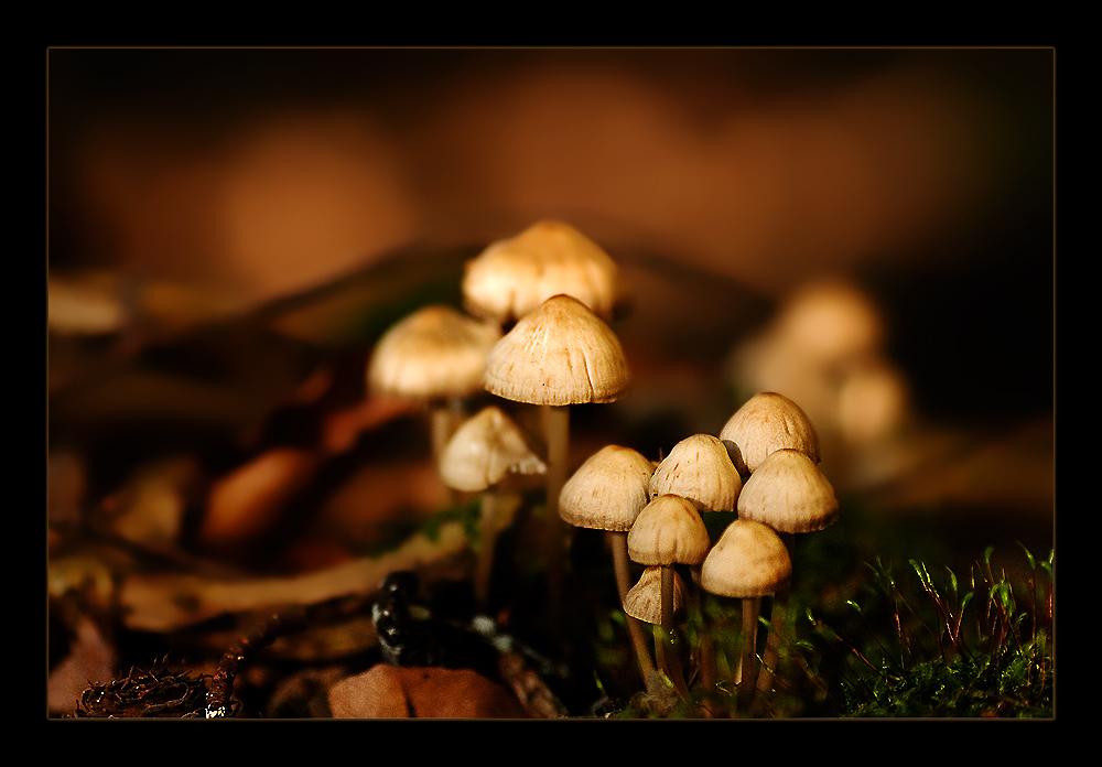 Waldschönheiten