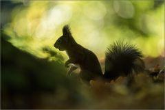 ~ Waldschrat ~