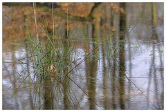 Waldsee I