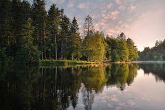 Waldsee Idylle