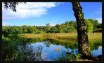 Waldsee-Idylle