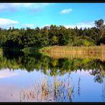 Waldsee im Spätsommer