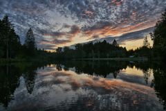 Waldseespiegelung
