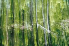 Waldsommer