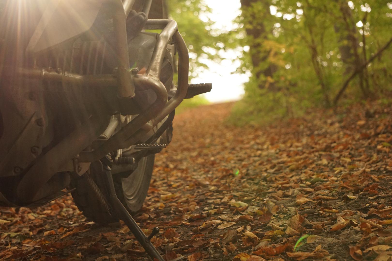 Waldspazierfahrt