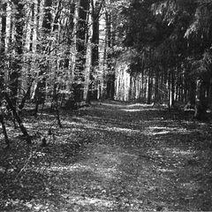 Waldspaziergang Münster