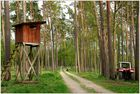 Waldspaziergang  #2