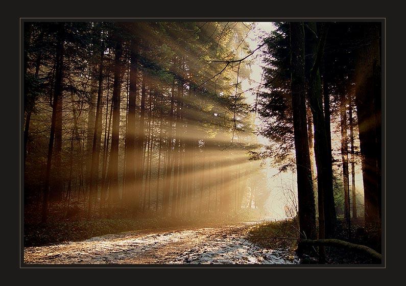 Waldspaziergang 3
