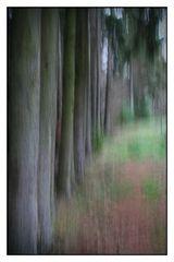Waldspaziergang...