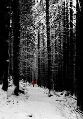 Waldspaziergang....