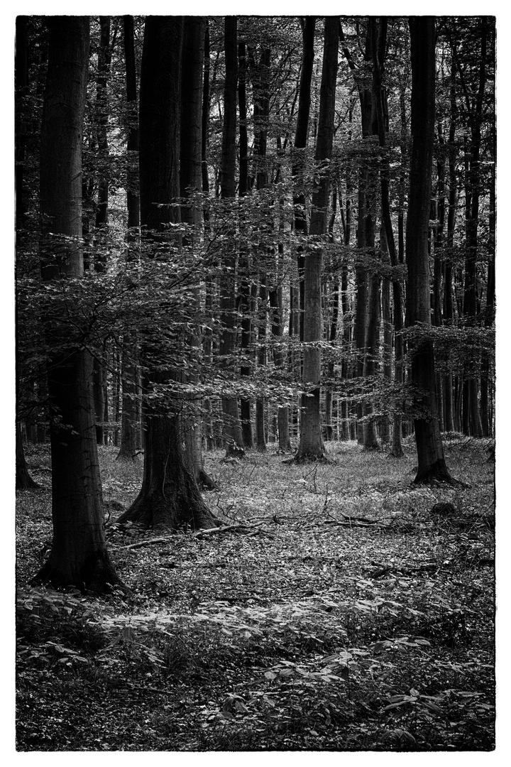 """Waldspaziergang"""