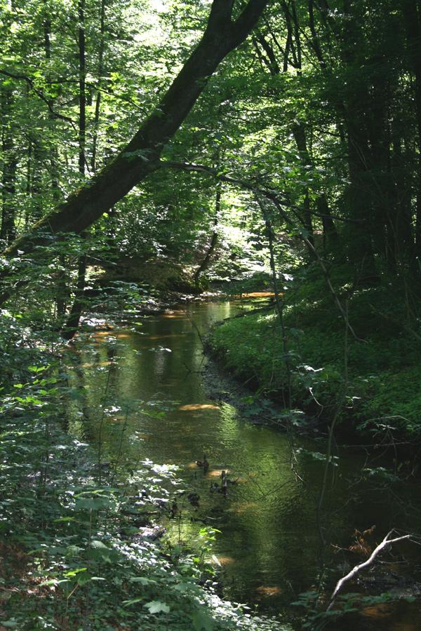 Waldspaziergang am Fluß