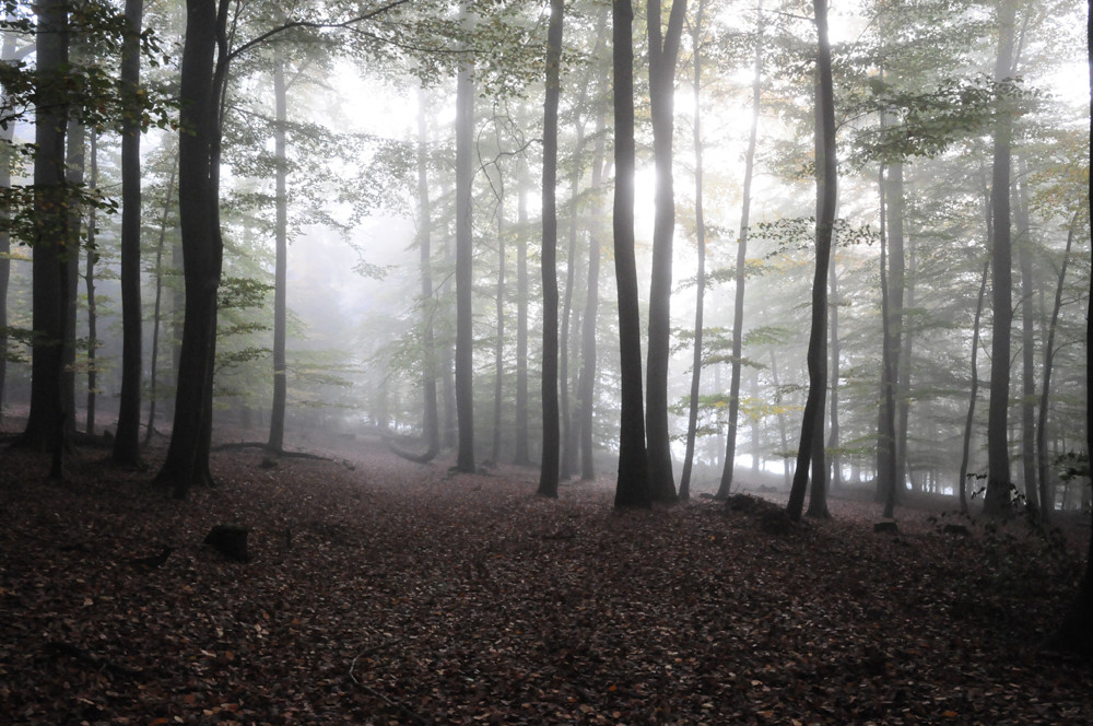 ... Waldspaziergang im Oktober ...