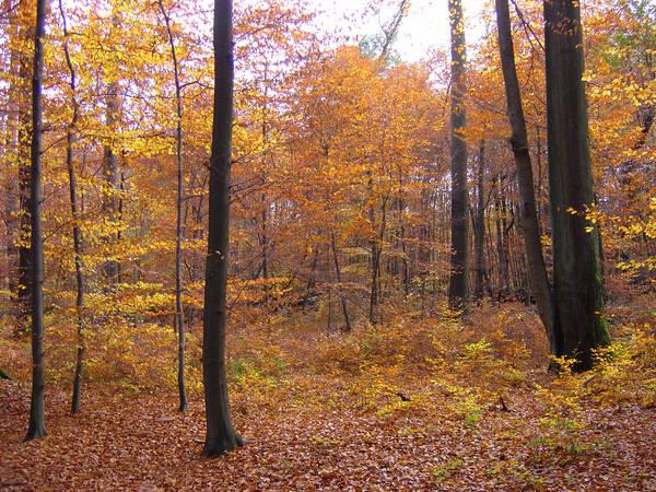 Waldspaziergang m November