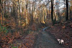 Waldspaziergang mit Amy, Januar 2015