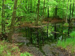 Waldspiegelung 2