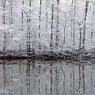 Waldspiegelung - am Kraichsee -
