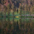 Waldspiegelung im Herbst