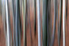 Waldspielerei