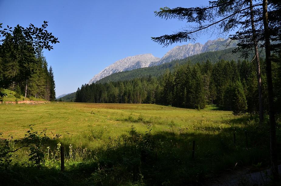 Waldsteig #8