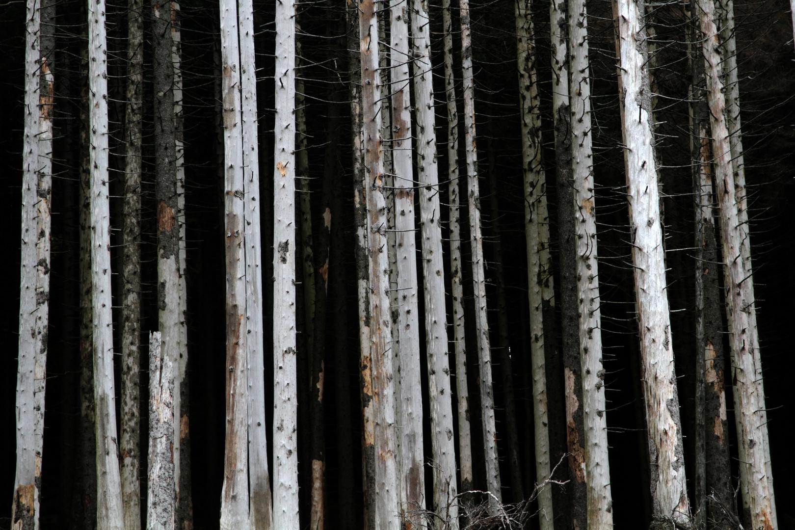 Waldsterben am Brocken