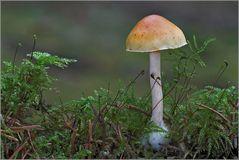 Waldstilleben.....