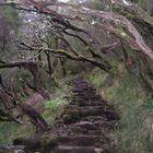 Waldstimmung auf Madeira