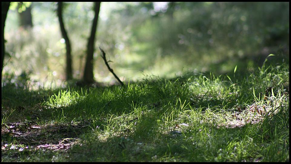 Waldstimmung No 5595