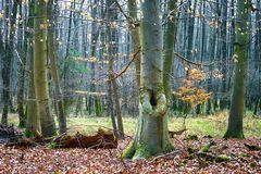 Waldstück mit Buchen - Naturschutzgebiet Mönchbruch