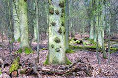 Waldstück mit Eichen - Naturschutzgebiet Mönchbruch