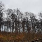 Waldstück mit Rot Milan Nest