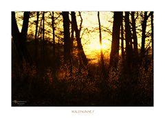 Waldsunset