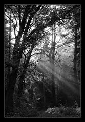 - Waldträumen -